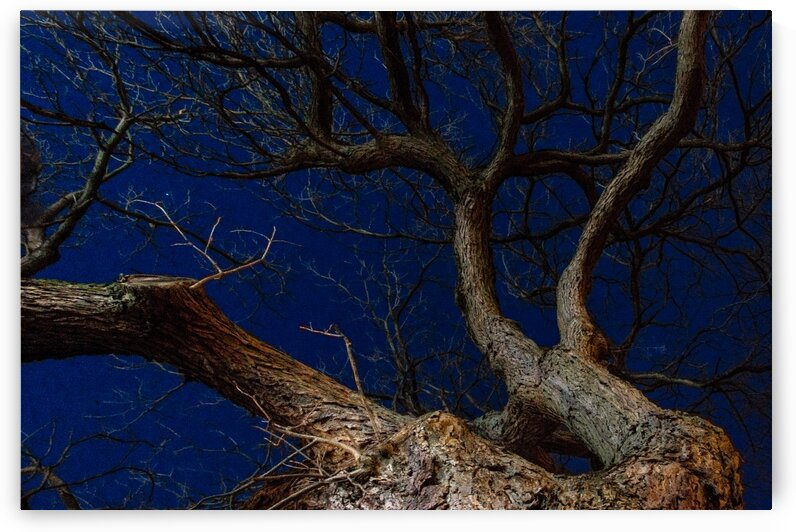 True Twilight by Maung Tin