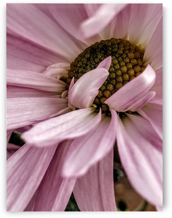 Playful Pink Petals by Neene Gallery