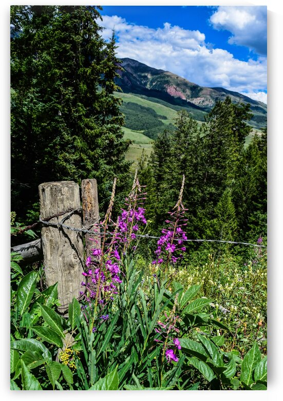 Crested Butte Wildflowers by Wagner Photography