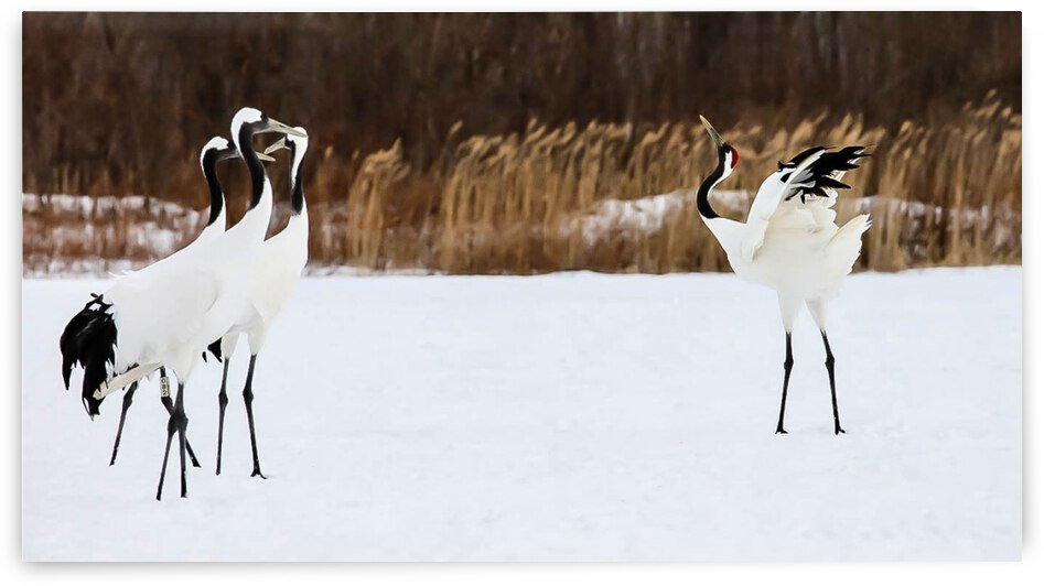 Courting by Wagner Photography