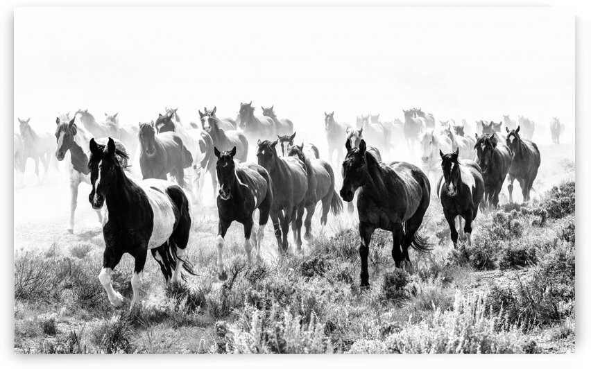 Stampede by Wagner Photography