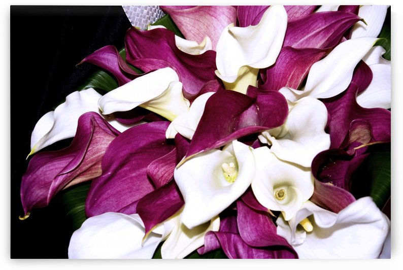 ORCHIDS by Henri Hadida