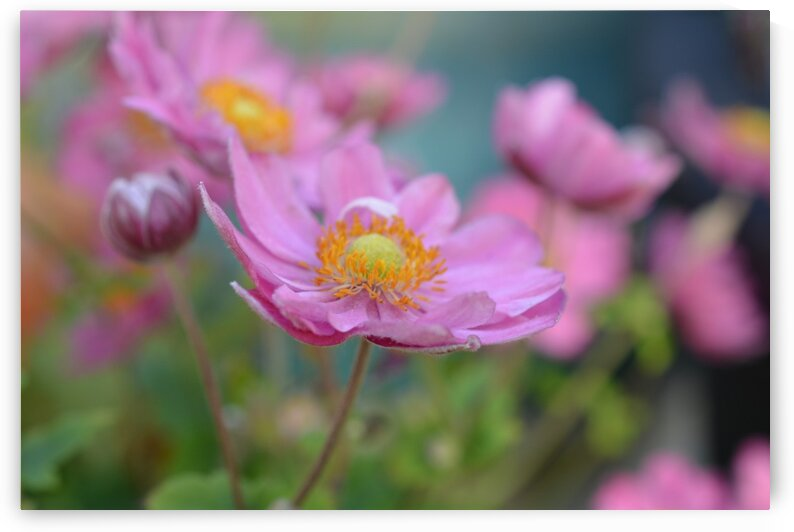 Pink Floral Photography  by Katherine Lindsey Photography