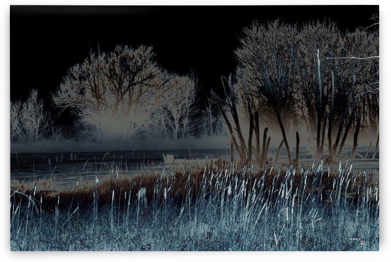 Penombre au marais- Collection EXC-S Art by Sylvain Bergeron Photographies