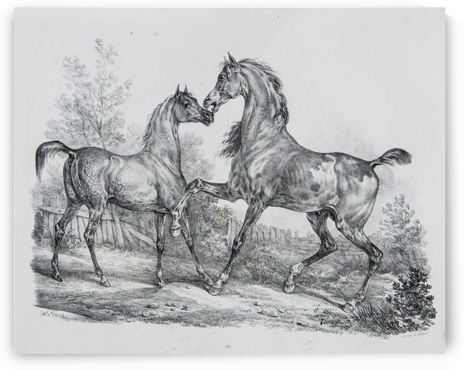 Group of horses by Antoine Charles Horace Vernet