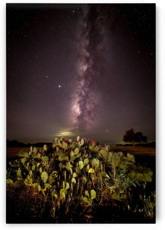 Cactus Milky Way by DeGidio Imaging