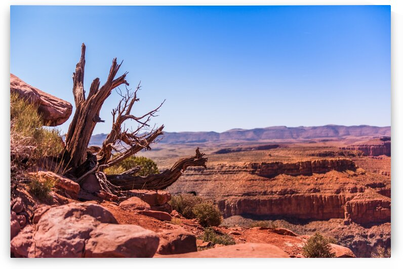Tree Stump Overlooking the Grand Canyon by Bobby Twilley Jr