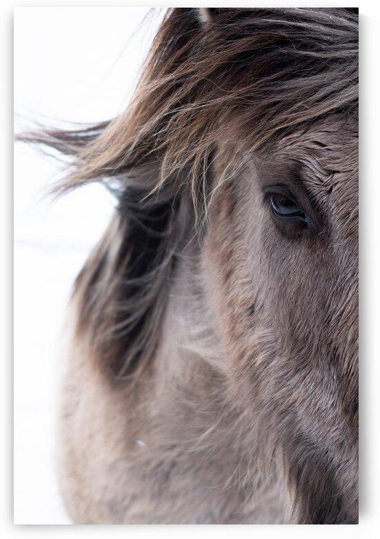 Icelandic Horse by Pete bird - StrangeWorkz