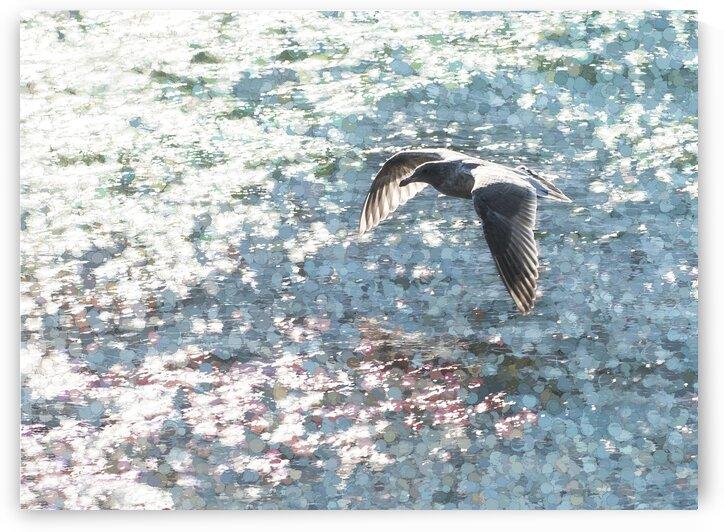 Sparkling Gull  by Carmel Studios