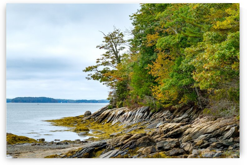 Wolfes Neck Shore by Dave Therrien