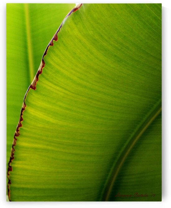 Banana Leaf Abstract 0529 by Lawrence Costales