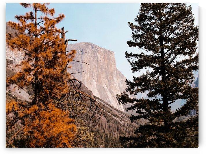At Yosemite national park USA with autumn tree by TimmyLA