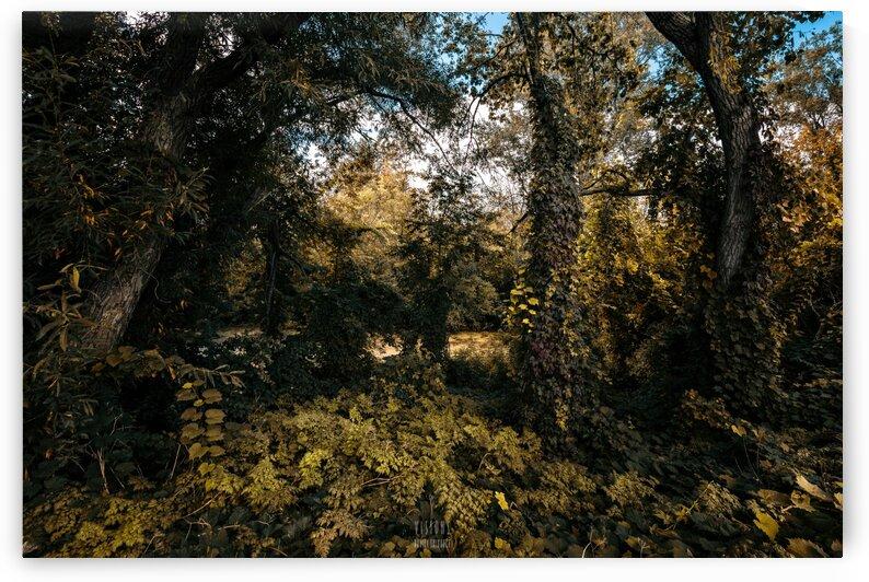 Monet style 1 by Daniel Thibault artiste-photographe
