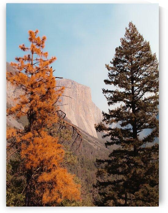 mountain with autumn tree at Yosemite national park USA by TimmyLA