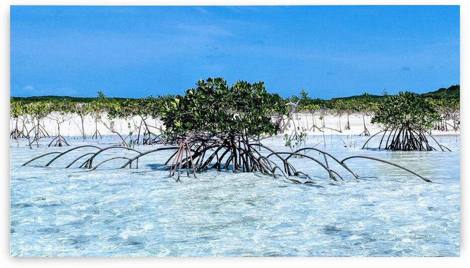 Mangroves in Estuary by Broken Compass Life Photography