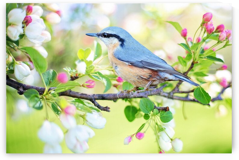 spring bird by Nature Art