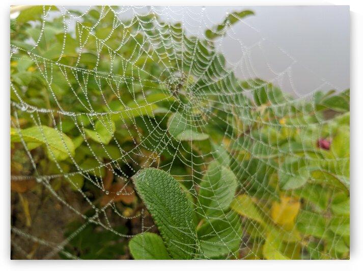 Arachnid Pearls by Jackdaw