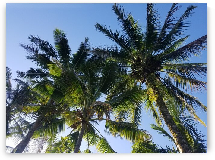 PalmTrees in Hilo by Kathleen Anderson