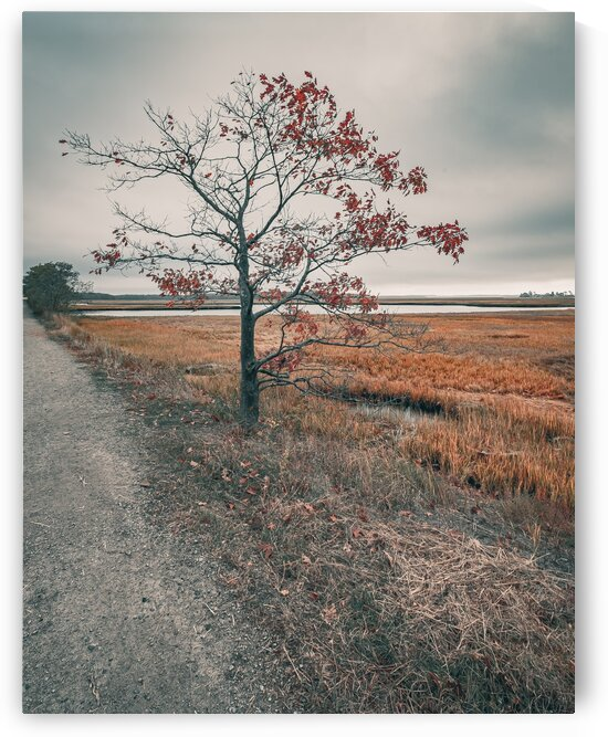 Scarborough Marsh 7 by Dave Therrien