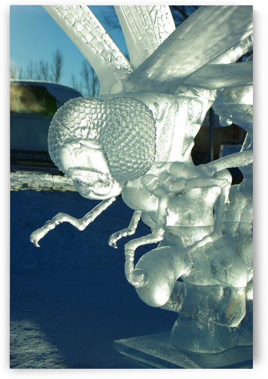 Ice Dragonfly by Kristian Gunderson