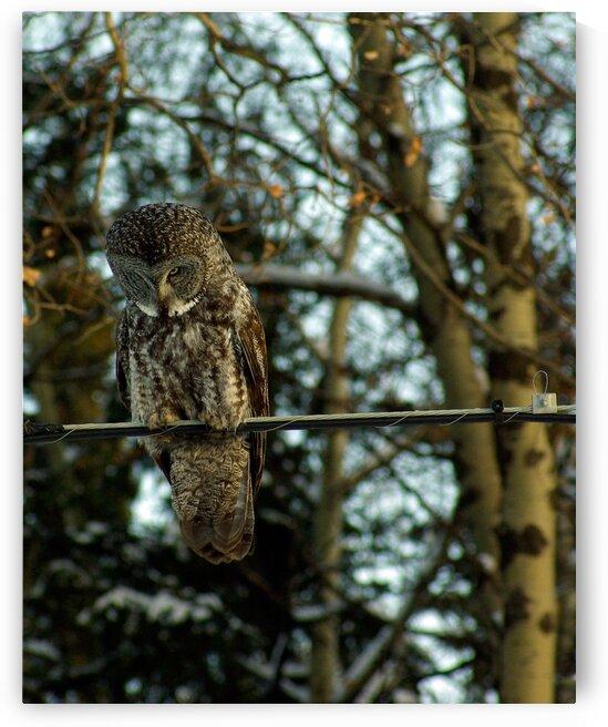 Owl by Kristian Gunderson