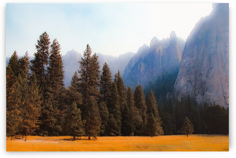 pine tree with mountain background at Yosemite national park California USA by TimmyLA