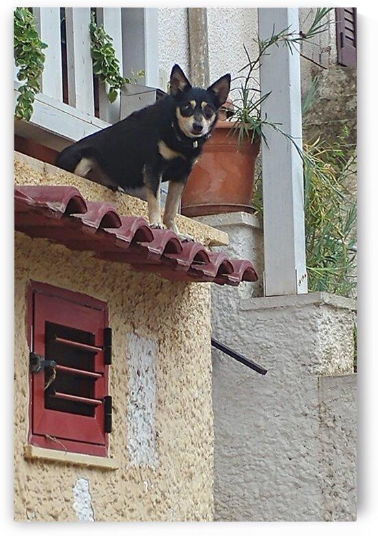 Little Dog by LiveeviL