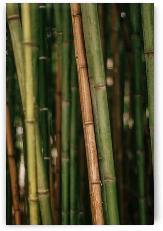 Soothing bamboo forest by Samantha Hemery