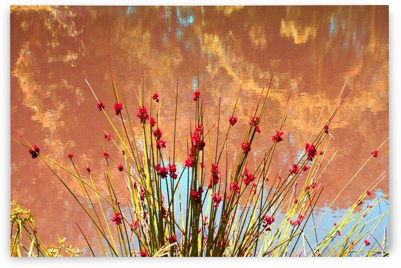 Pretty Pond Weeds by Ellen Barron O-Reilly