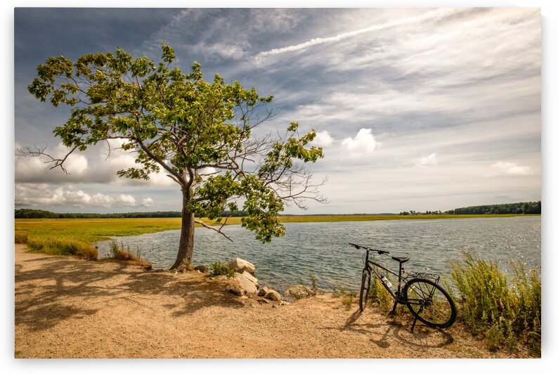 Scarborough Marsh 8 by Dave Therrien