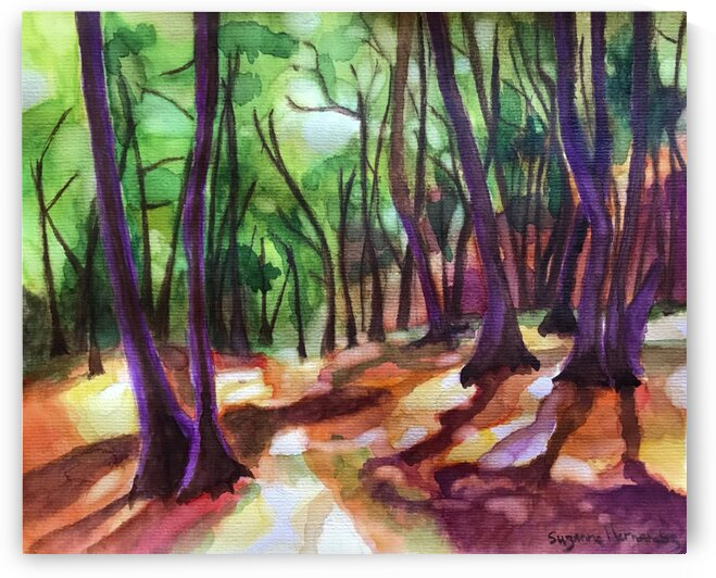 Forest Light by Suzanne Hernandez