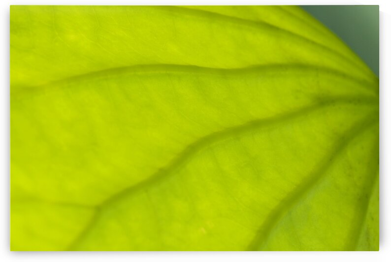 Abstract part of leaf pattern close up by Atelier Knox