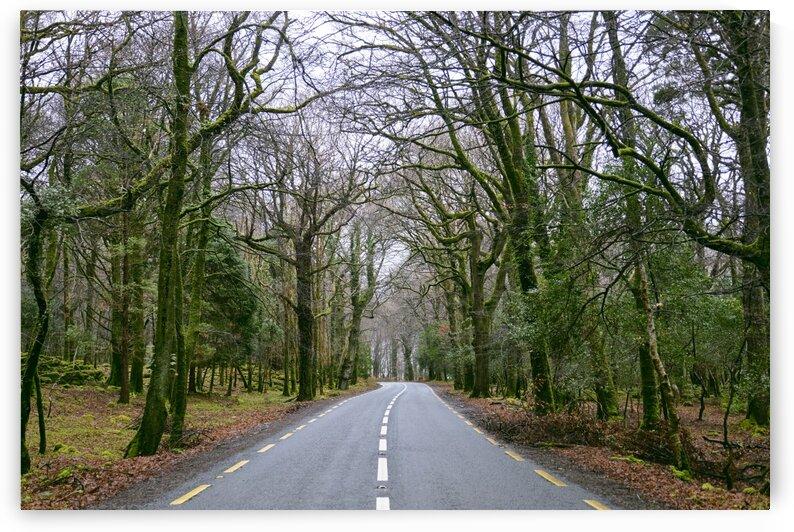 Road through killarney national park Co. Kerry Ireland Europe by Atelier Knox