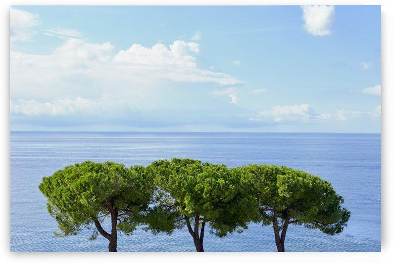 Three trees on the slovenian adriatic coast Piran Slovenia by Atelier Knox