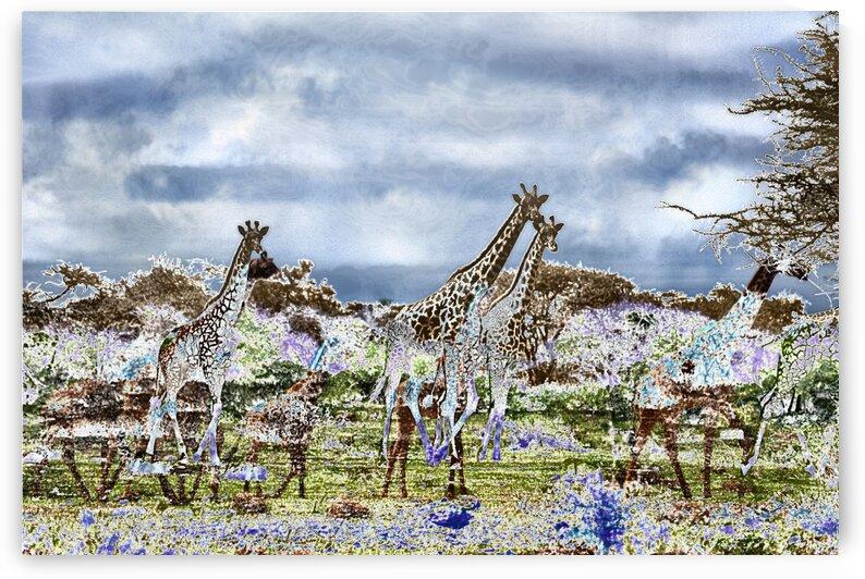 Giraffes Blue Africa by D de G