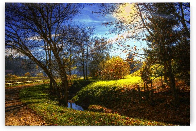 Creek in the autumn by Dario Barukcic