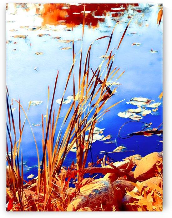 Reed Grasses  by Lisa Drew Minneapolis Photo Artist