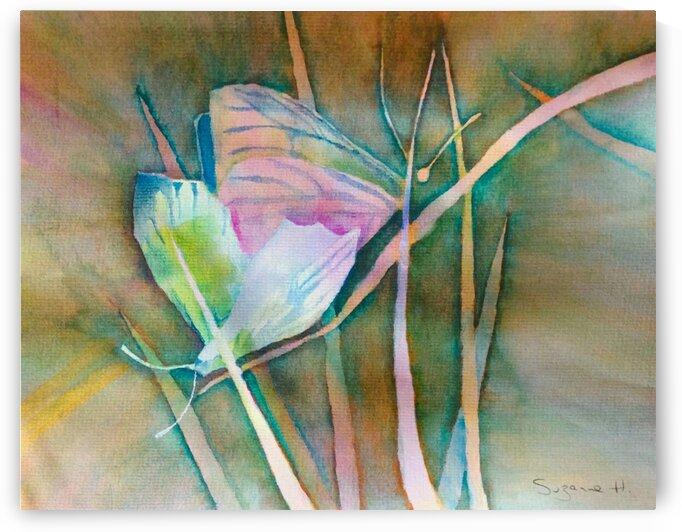 Butterflies  by Suzanne Hernandez