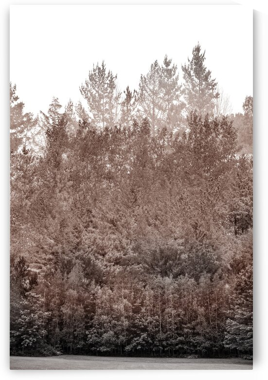 Composition of a beige terracotta monochromatic imaginary forest by Francois Lariviere