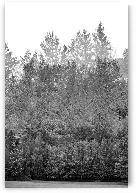 Composition of a black and white imaginary forest by Francois Lariviere