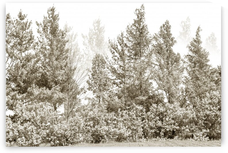 Composition of a beige monochromatic imaginary forest by Francois Lariviere