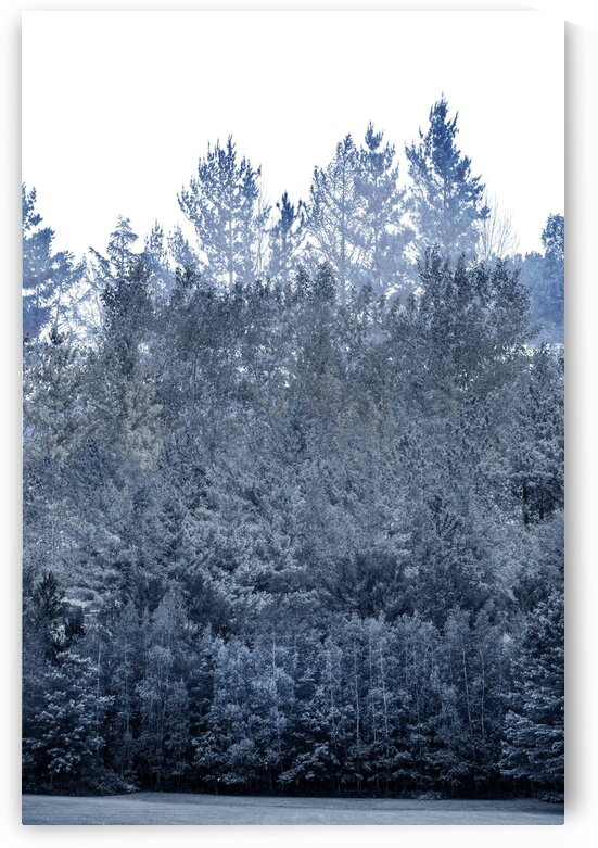 Composition of a blue monochromatic imaginary forest by Francois Lariviere