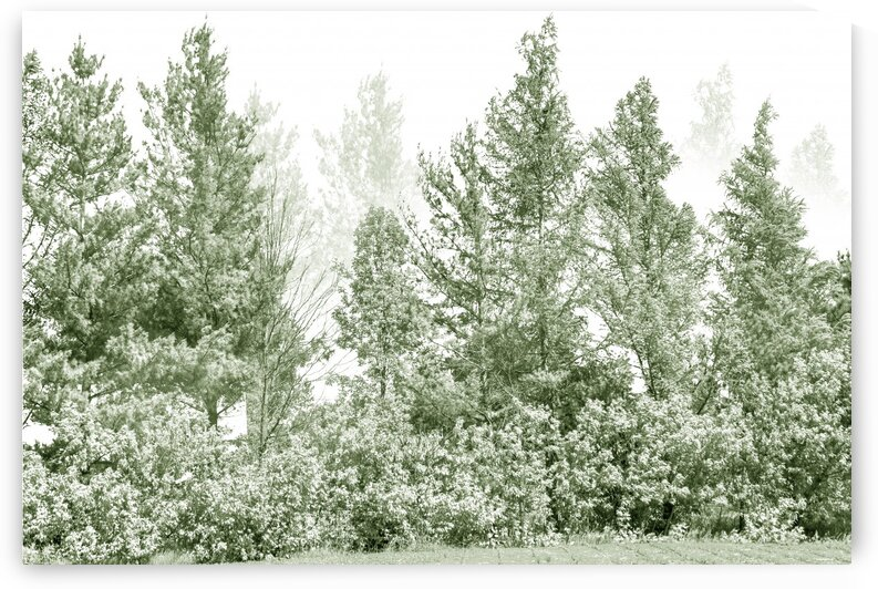Composition of a green olive monochromatic imaginary forest by Francois Lariviere