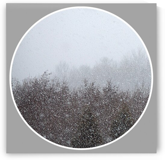 Snowing  Moment I by Joan Han