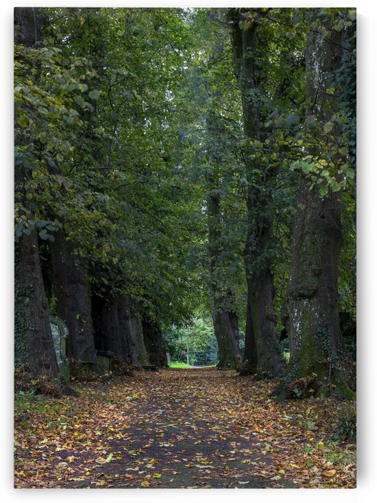 Tree lined path in Autumn by Leighton Collins