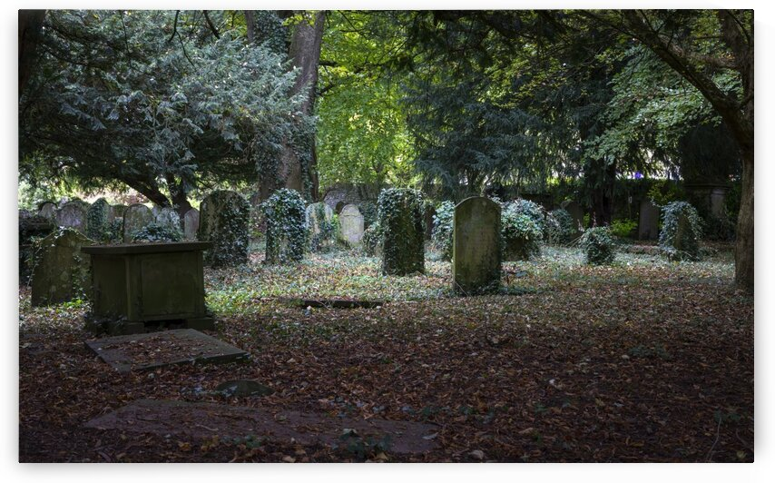 Ivy covered gravestones by Leighton Collins