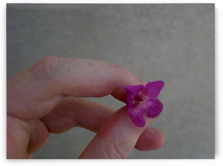 little purpleflower by Debbie-s Photo Korner