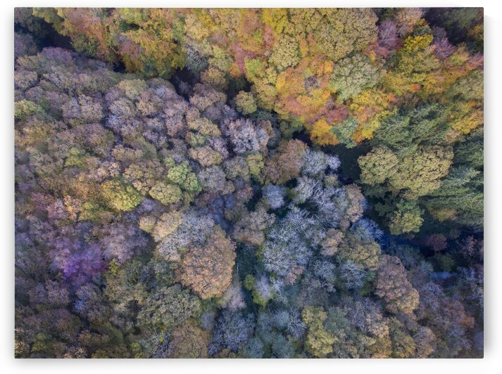 Autumn tree tops by Leighton Collins