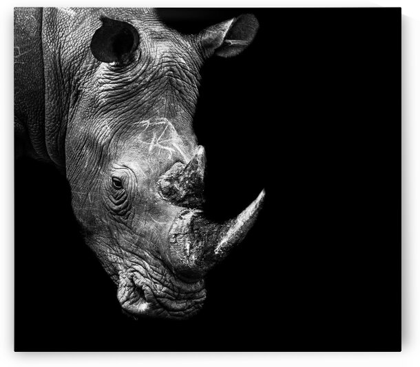 Rhino by Bill Sewell