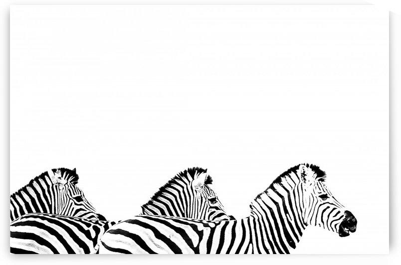 Zebra Wave by Bill Sewell